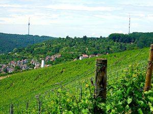 Weinwandertag Stuttgart Hedelfingen Rohracker Muttertag