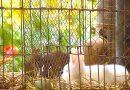Kleintierzüchterverein Rohracker: Tag der offenen Tür