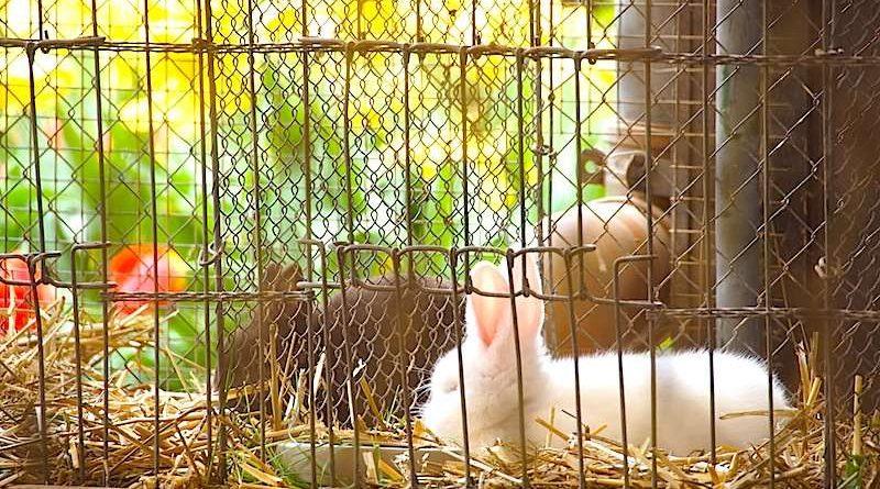 Kleintierzüchterverein Stuttgart Rohracker