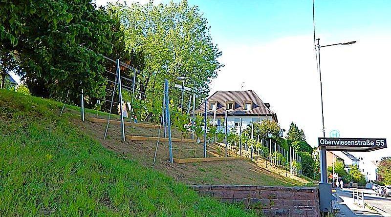 Johann Heinrich Strauß-Platz Stuttgart Sillenbuch Juni 2018