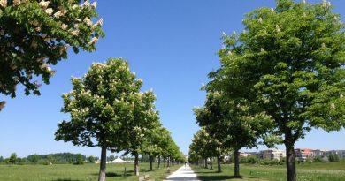 Scharnhauser Park